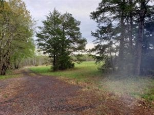100 Acres of Hunting Land For Sale in Halifax County VA!