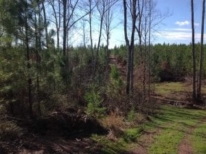 SOLD!!  54 Acres of Hunting Land for Sale in Halifax County VA!