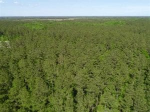 SOLD!!  20.4 Acres of Hunting and Timber Land For Sale in Jones County NC!