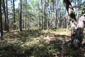 REDUCED!  442 Acres of Waterfront Hunting and Timber Land For Sale in Pamlico County NC!
