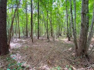 UNDER CONTRACT!!  34.39 Acres of Farm Land For Sale in Dinwiddie County Virginia!
