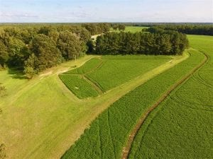 SOLD!!  148 Acres of Farm and Timber Land & 25% Interest in 128 Acres of Timber Land For Sale in Wilson County NC!