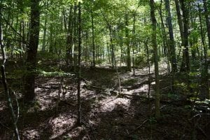 SOLD!!  55 Acres of Hunting and Recreational Land For Sale in Alleghany County VA!