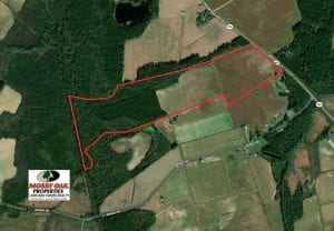 97 Acres of Farm and Timber Land For Sale in Columbus County NC!