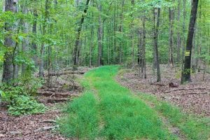 UNDER CONTRACT! 95.7 Acres of Timber Land For Sale in Buckingham County VA!