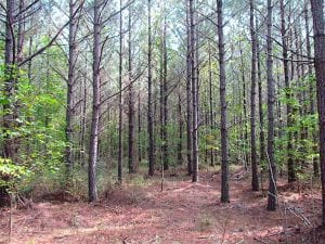 3 Acre Building Site For Sale in Southampton County VA!