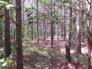 REDUCED! 3 Acre Building Site For Sale in Southampton County VA!