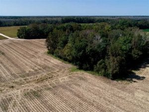 UNDER CONTRACT!!  31 Acre Timber and Farm Land for Sale in Bertie County NC!