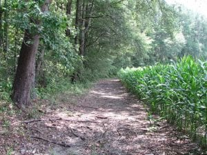 SOLD!!  222 Acres of Farm and Hunting Land For Sale in Isle of Wight County VA!