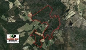 UNDER CONTRACT!!  744.83 Acres of Hunting and Timber Land For Sale in Bladen County NC!
