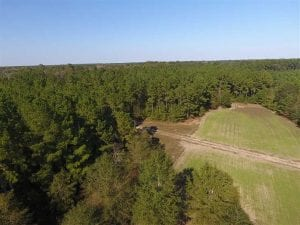 744.83 Acres of Hunting and Timber Land For Sale in Bladen County NC!