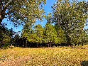 UNDER CONTRACT!!  32 Acres of Residential and Hunting Land For Sale in Chesapeake City VA!