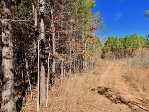 SOLD!!  81.9 Acres of Hunting and Timber Land for Sale in Caswell County NC!