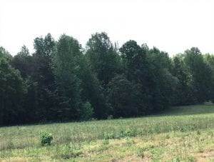 REDUCED!  144 Acres of Hunting and Farm Land For Sale in Halifax County VA!