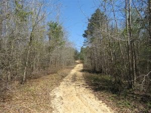 35 Acres of Hunting Land with Home Site in Scotland County NC!