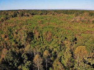 46.79 Acres of Hunting Land for Sale in Brunswick County VA!