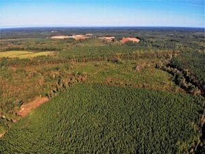 UNDER CONTRACT!!  46.79 Acres of Hunting Land for Sale in Brunswick County VA!
