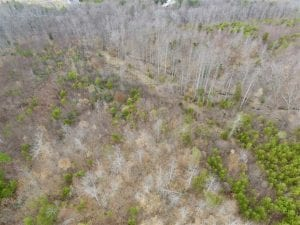 SOLD!!  28.8 Acres of Hunting and Residential Land For Sale in Fluvanna County VA!