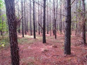 SOLD!!  138 Acres of Hunting Land For Sale in Southampton County VA!