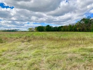 54 Acres of Farm and Timber Land For Sale in Pitt County NC!