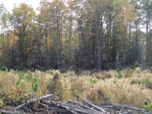 46 acres of Recreational Timberland For Sale in King and Queen Co VA!