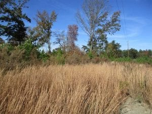SOLD!!  46 acres of Recreational Timberland For Sale in King and Queen Co VA!