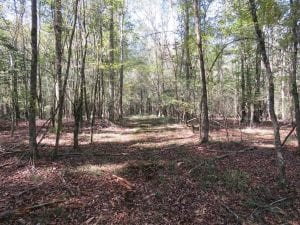 UNDER CONTRACT!!  327.5 acres of Hunting and Timberland for Sale in Bladen County NC!