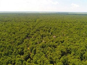 UNDER CONTRACT!!  60 Acres of Hunting Land For Sale in Hyde County NC!