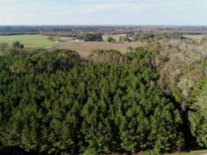 SOLD!!  22.72 Acres of Recreational Timberland For Sale in Washington County NC!