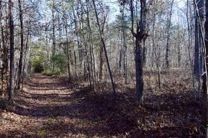 48.679 Acres of Hunting / Recreation Land For Sale in Amherst County VA!