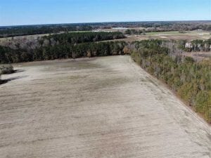 UNDER CONTRACT!!  146 acres of Timberland and Farmland For Sale in Robeson County, NC!
