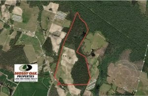 146 acres of Timberland and Farmland For Sale in Robeson County, NC!