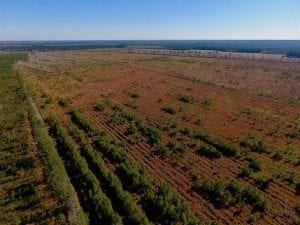UNDER CONTRACT!!  100 Acres of Farmland, Timberland, and Hunting Land For Sale in Jones County NC!