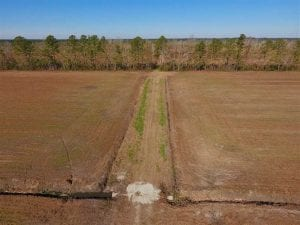 UNDER CONTRACT!!  106.3 Acres of Farmland, Timberland, and Hunting Land For Sale in Jones County NC!