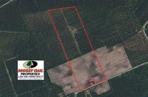 105 Acres of Farmland, Timberland, and Hunting Land For Sale in Jones County NC!