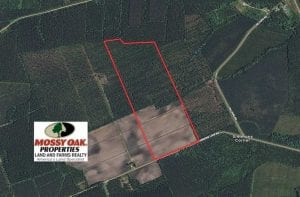 100 Acres of Farmland, Timberland, and Hunting Land For Sale in Jones County NC!