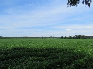 UNDER CONTRACT!!  35 Acres of Farm and Hunting Land For Sale in Duplin County NC!