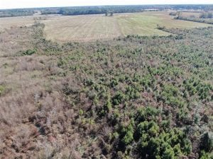 69 acres of Hunting and Farmland For Sale in Robeson County NC!