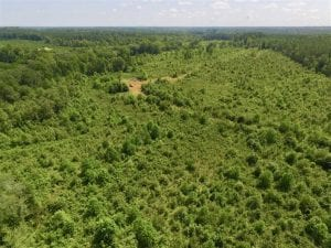 49.5 Acres of Recreational and Hunting Land For Sale in Brunswick County VA!