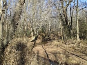 SOLD!!  63 Acres of Timber and Hunting Land For Sale in Caroline County VA!