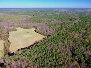 UNDER CONTRACT!!  107.9 Acres of Timber and Hunting Land For Sale in Nash County NC!