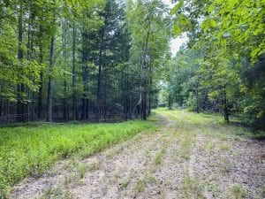 REDUCED!! 77.82 Acre Homesite and Hunting Land For Sale in Orange County NC!