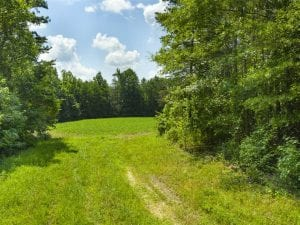 SOLD!!  85.62 +/- Acres of Hunting and Farm Land For Sale in Person County NC!