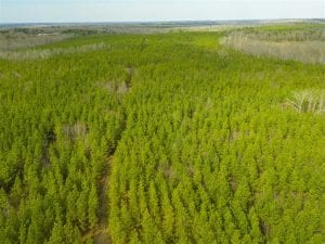 SOLD!!  137.93 Acres of Investment Timber Land for Sale in Person County  NC!