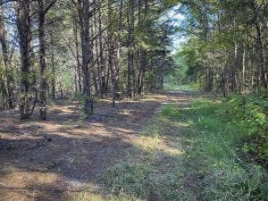 UNDER CONTRACT!!  20.01-acre Homesite (Lot-5) for Sale in Orange County, NC!