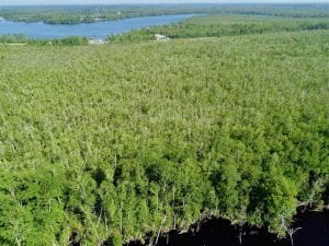 320 acres of Waterfront Property for Sale in Camden County, NC!