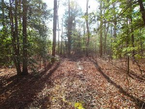21 Acres of Tall Timber in the Countryside of Mathews County Virginia!