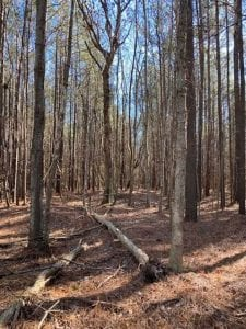 UNDER CONTRACT!!  20.88  acres of Hunting / Homesite Land for Sale in Accomack County VA