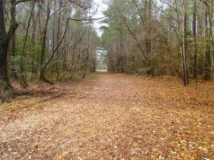 UNDER CONTRACT!!  42 Acres with 2,000 feet of River Frontage in Isle of Wight County Virginia!
