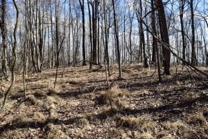 15.96 Acres of Residential Hunting Land For Sale In Bedford County VA!